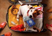viajar de avião com animal de estimação